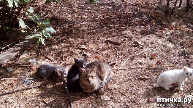 фото 6: Как вы можете помочь бездомным котятам и кошкам