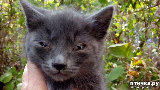 фото 7: Как вы можете помочь бездомным котятам и кошкам