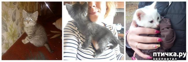 фото 8: Как вы можете помочь бездомным котятам и кошкам
