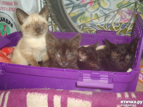 фото 9: Как вы можете помочь бездомным котятам и кошкам