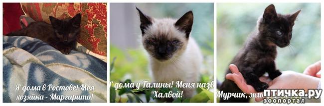 фото 10: Как вы можете помочь бездомным котятам и кошкам