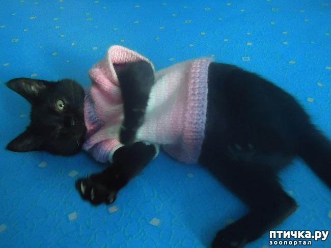 фото 11: Как вы можете помочь бездомным котятам и кошкам