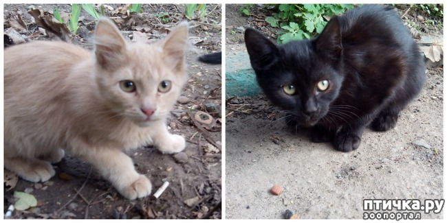 фото 13: Как вы можете помочь бездомным котятам и кошкам
