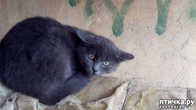 фото 14: Как вы можете помочь бездомным котятам и кошкам