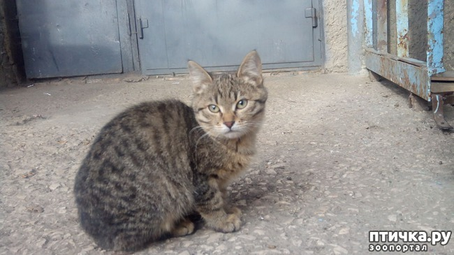 фото 15: Как вы можете помочь бездомным котятам и кошкам