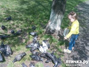фото: Кормим голубей