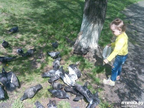 фото 1: Кормим голубей