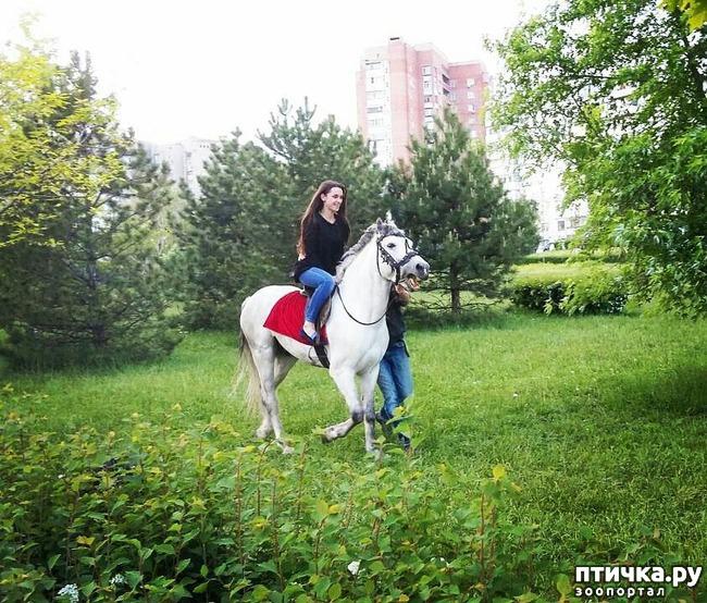 фото 3: Наше первое катание на лошади. Радости нет предела!)