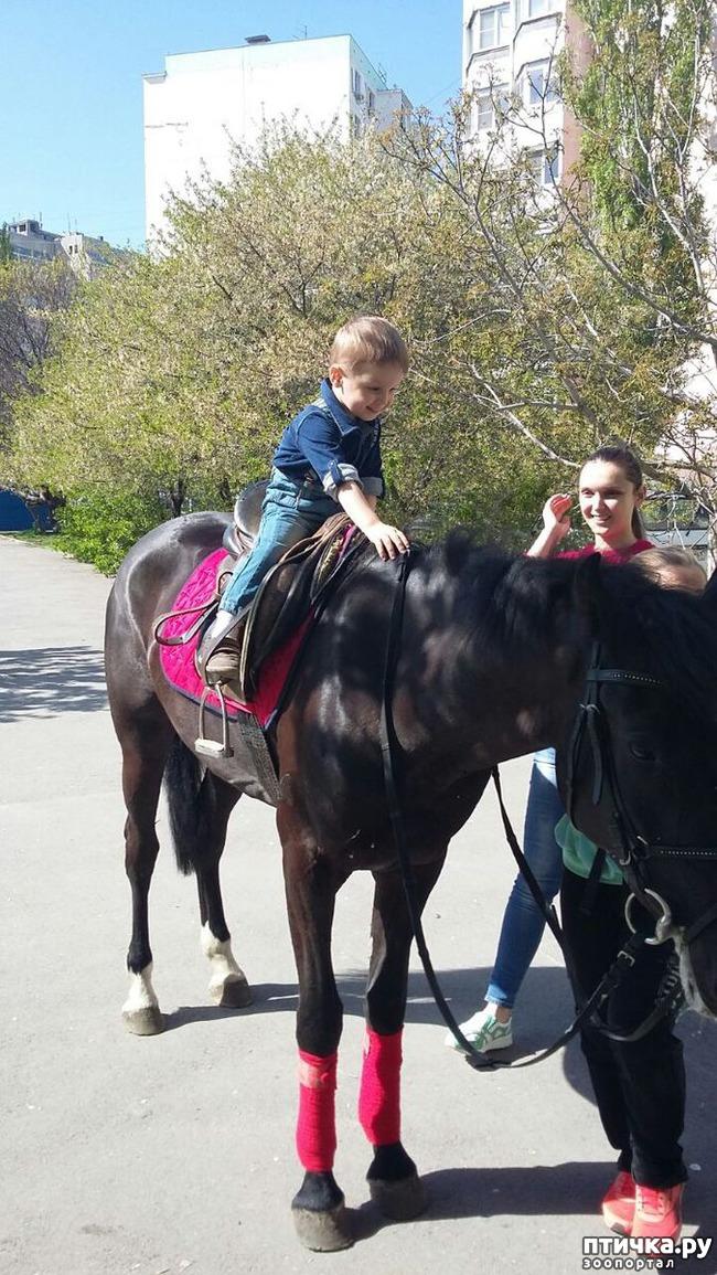 фото 4: Наше первое катание на лошади. Радости нет предела!)