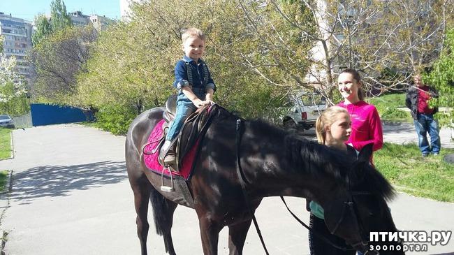 фото 5: Наше первое катание на лошади. Радости нет предела!)