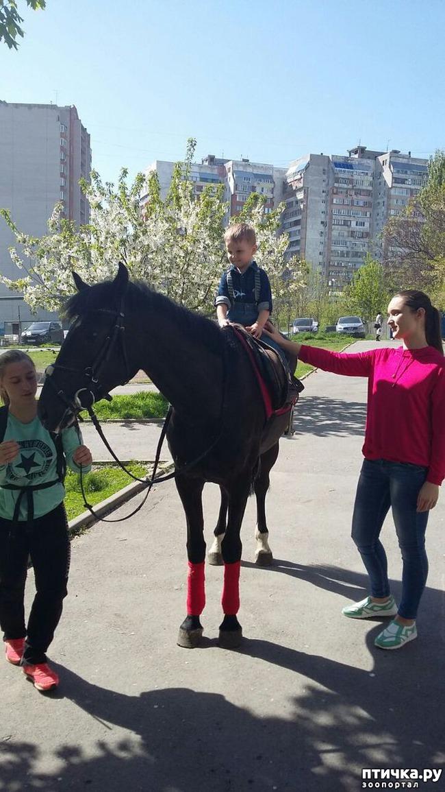 фото 6: Наше первое катание на лошади. Радости нет предела!)