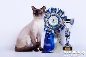 фото: Окрасы тайский кошек. Часть I
