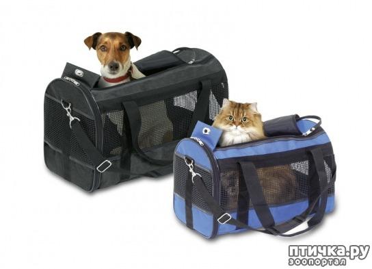 фото 5: Как помочь кошке перенести дальнюю дорогу.