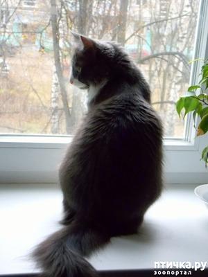 фото: Как отучить кошку гадить в неположенном месте