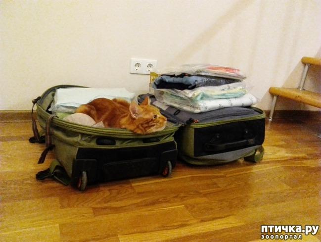 фото 6: Как помочь кошке перенести дальнюю дорогу.