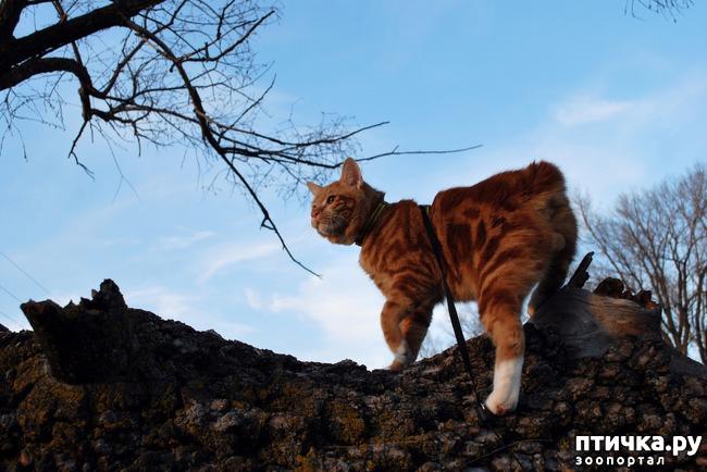 фото 2: Как помочь кошке перенести дальнюю дорогу.