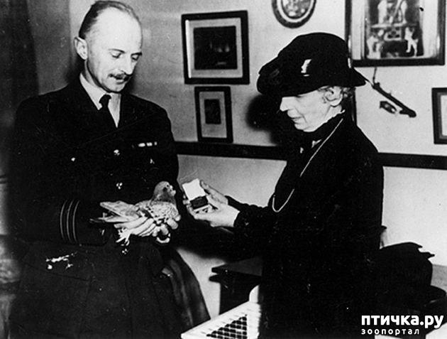фото 5: Голуби-герои Первой и Второй мировой войны.