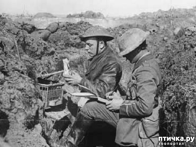 фото 9: Голуби-герои Первой и Второй мировой войны.