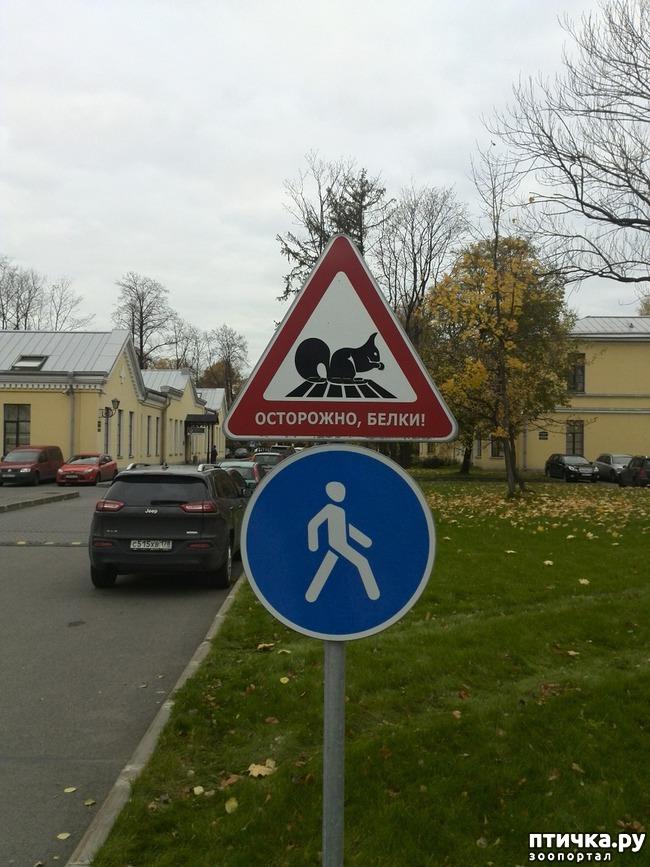 фото 1: Белка в городе гуляет...