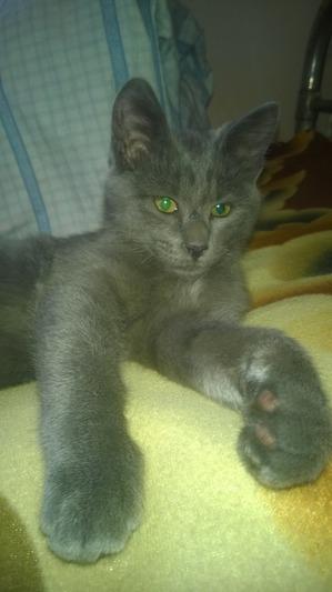 фото: Мичман, он же Мачо, он же Мачик