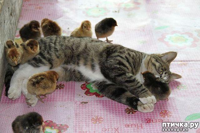фото 4: Петухи поют - заливаются, а бабули все умиляются)))