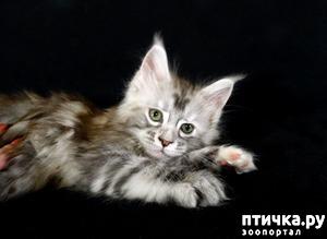 фото: Сколько нянек нужно, что бы уложить спать одного котенка?