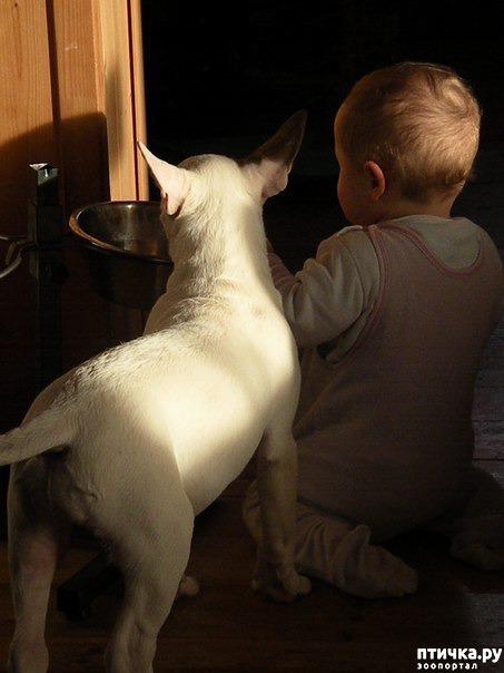 фото 2: Щенок и ребенок