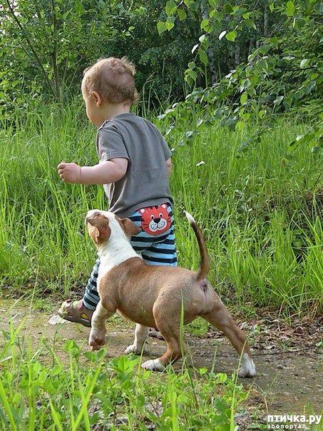 фото 3: Щенок и ребенок
