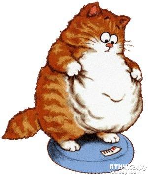 фото: Как заставить кошек худеть