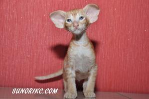 фото: РЕКОМЕНДАЦИИ ПО СОДЕРЖАНИЮ И КОРМЛЕНИЮ КОТЕНКА (часть II - готовимся к появлению котенка в доме)