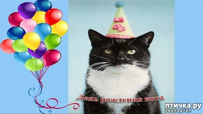 фото 1: Коты именинники