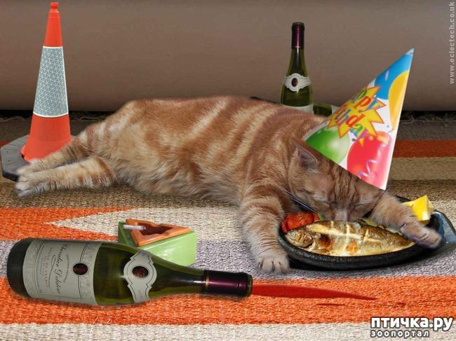 фото 2: Коты именинники