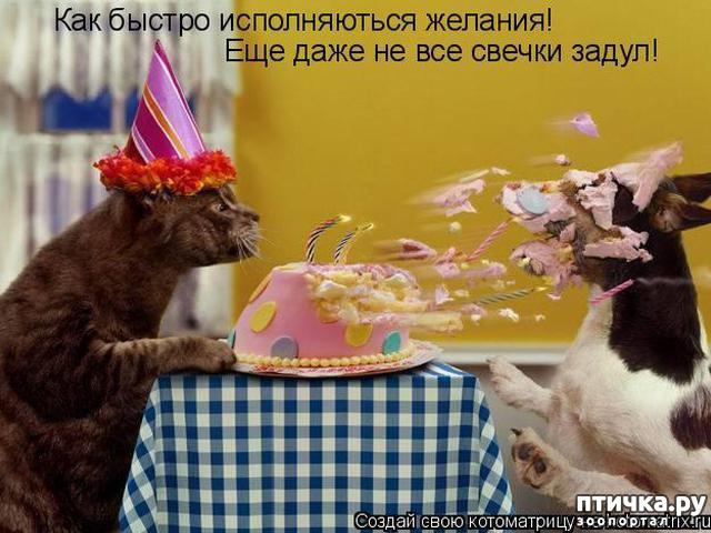 фото 3: Коты именинники