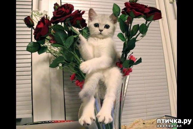 фото 5: Коты именинники