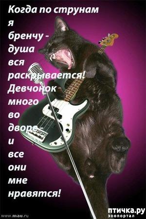 фото: Кот - гитарист.