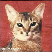 фото 7: История абиссинской породы. Версия третья - английская