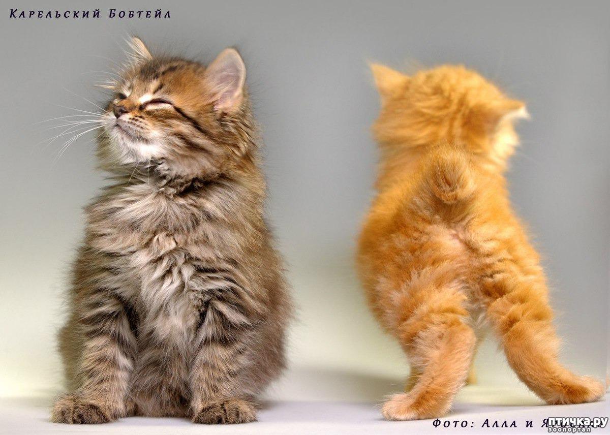 Гифки удивление, я тебя очень люблю картинки с надписями кошками