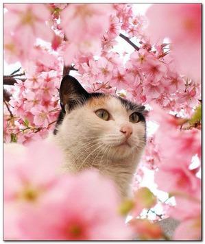 """фото: День кошек в Японии """"нян-нян-нян""""))"""