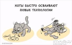 фото: О полезности кота.