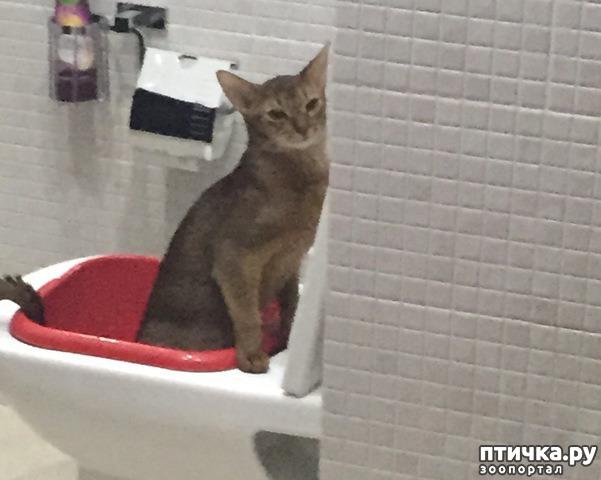 фото 2: Вот что случается, когда котик думает, что он человек!