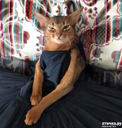 фото 3: Вот что случается, когда котик думает, что он человек!