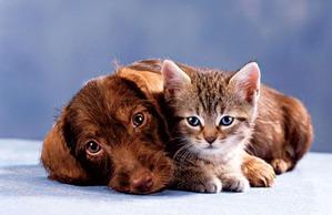 фото: Как подружить кошку с собакой