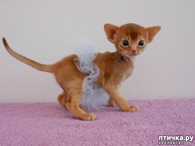 фото 5: Вот что случается, когда котик думает, что он человек!