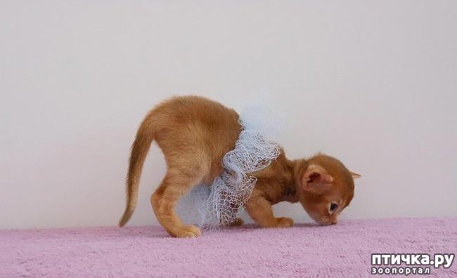 фото 6: Вот что случается, когда котик думает, что он человек!