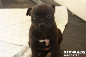 фото: Воспитание щенка в первые дни дома