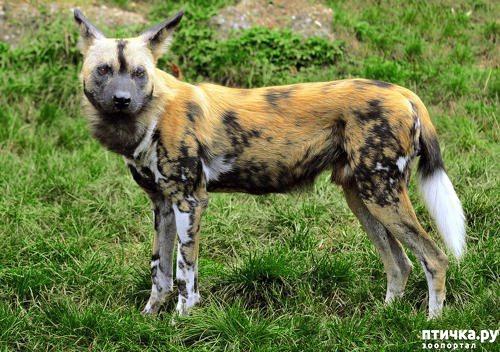 фото 1: Ещё один представитель Африканской фауны.