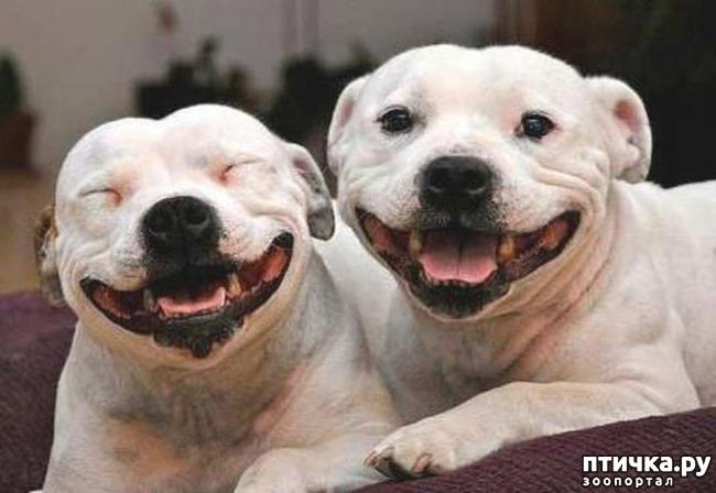 фото 2: Собаки-улыбаки