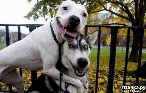 фото 3: Собаки-улыбаки