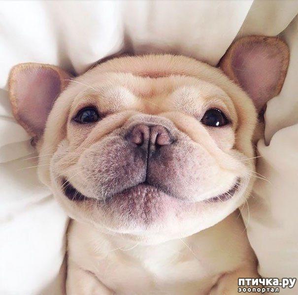 фото 4: Собаки-улыбаки