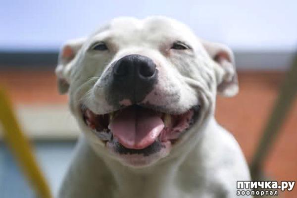 фото 7: Собаки-улыбаки